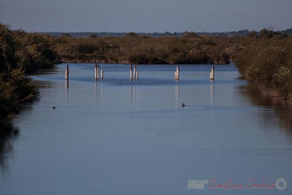 Réservoir du Domaine de Graveyron, Audenge, espace naturel sensible de Gironde