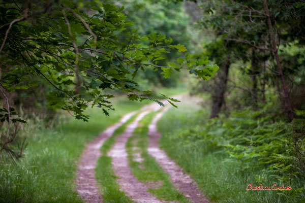 Forêt de Migelan, espace naturel sensible, Martillac / Saucats / la Brède. Samedi 23 mai 2020. Photographie : Christian Coulais