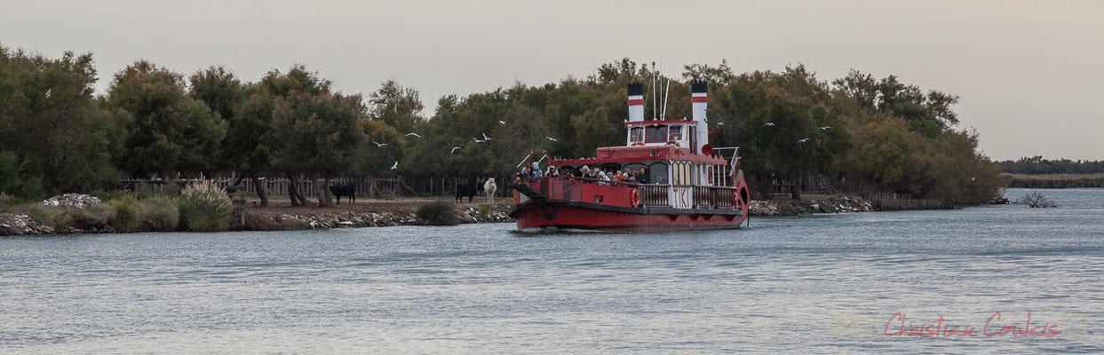 15h33 Arrivée du Tiki III, bateau à roue à aubes arrière, à proximité d'une manade et du bac du Sauvage, sur le Petit Rhône