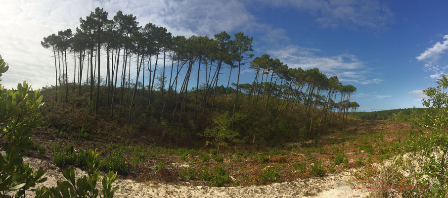 Barkhanes, seconde génération de dunes en forme de croissant allongé dans le sens du vent, aux pointes orientées vers l'est. Réserve naturelle de l'étang de Cousseau
