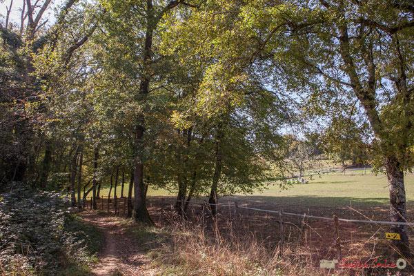 Chemin de randonnée Cénac-Mons, hameau du Cloutet, Cénac, Gironde. 16/10/2017