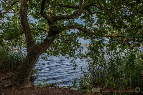 L'étang de Cousseau et son marais représentent une frayère exceptionnelle pour le brochet, poisson carnassier...