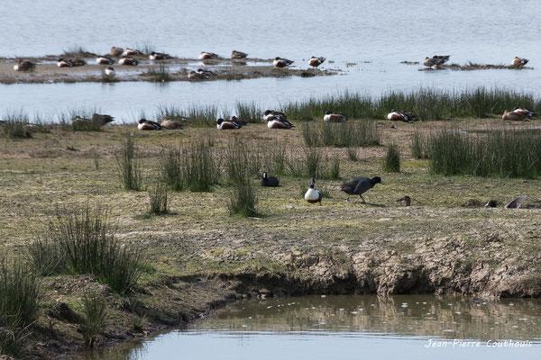 Réserve ornithologique du Teich. Photographie Jean-Pierre Couthouis. Samedi 16 mars 2019