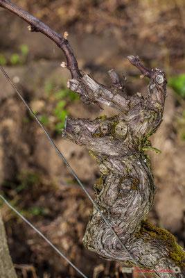 """""""Cervus elaphus"""". Vitis vinifera Land Art"""