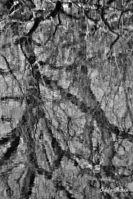 Réserve ornithologique du Teich. Photographie Odile Roux. Samedi 16 mars 2019