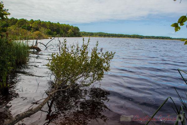 Le sentier de randonnée longe la rive l'étang de Cousseau...
