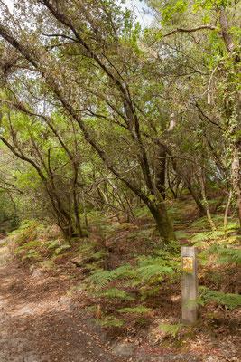 Présentation d'espèces animales ou végétales présentes sur la réserve naturelle...Étang de Cousseau