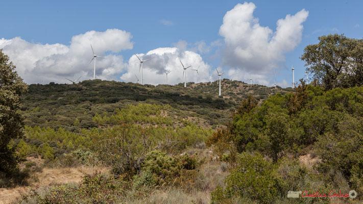 Cereales, viñedos y molinos de viento, entre Ujué y San Martín de Unx, Navarra / Céréales, vignes et éoliennes, entre Ujué et San Martin de Unx (objectif 48mm)
