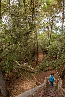 Départ pour suivre le chemin de randonnée qui longe l'étang de Cousseau...