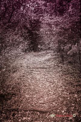 Petit sous-bois à l'ouest des allées de charmes, Domaine de Malagar. Centre François Mauriac, Saint-Maixant. 28/09/2019 Reproduction interdite - Tous droits réservés © Christian Coulais
