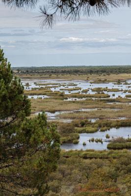 Les grues cendrée sont visibles sur la réserve du mois d'octobre au mois de février...Étang de Cousseau