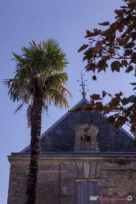 Palmier et toiture de la Villa Argentina, avenue de la République, Cénac, Gironde. 16/10/2017