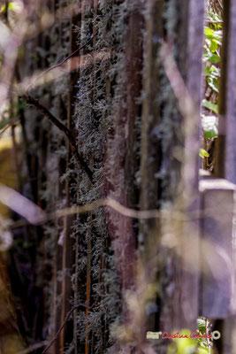 Land art IV. Réserve ornithologique du Teich. Samedi 16 mars 2019. Photographie © Christian Coulais