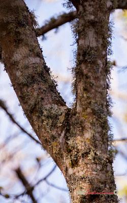 Tronc III, réserve ornithologique du Teich. Samedi 16 mars 2019