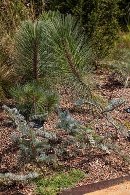 L'ivresse des elfes; Florence Guin, paysagiste; Aurélie Gueuiffey, conceptrice de parcs et jardins; France. Mercredi 26 août 2015. Photographie © Christian Coulais