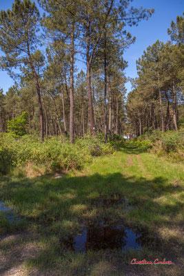 3/3 Pare-feu entre deux parcelles. Forêt de Migelan, espace naturel sensible, Martillac / Saucats / la Brède. Vendredi 22 mai 2020. Photographie : Christian Coulais