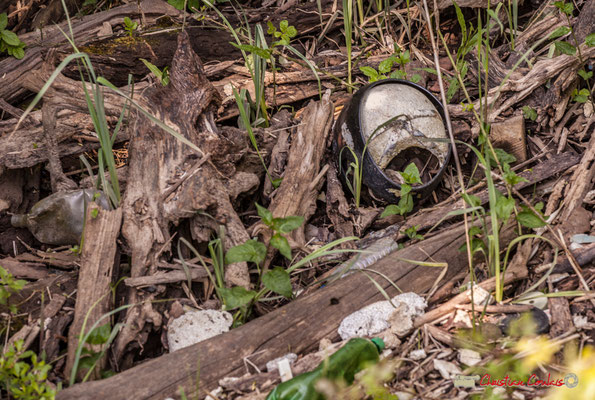 Casque de motard et autres déchets. Parcours de découverte de la roselière de l'Île Nouvelle, Gironde. 06/05/2018