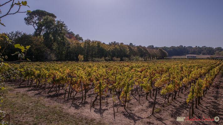 4 Parc et vignoble du château Guinault. Avenue de Bordeaux, Cénac, Gironde. 16/10/2017