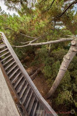 Très belle construction que cette tour d'observation sur les marais de l'étang de Cousseau...