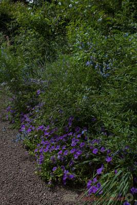 Fleur Bleue; Nicolas Jomain, Boriana Tchonkova, architectes DPLG; Reka; France. Mercredi 26 août 2015. Photographie © Christian Coulais