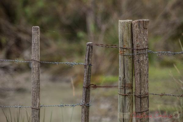 Travail de l'homme, clôture de bois et barbelés. Réserve naturelle régionale de Scamandre, Vauvert