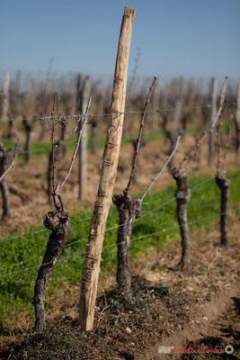 """""""Jauge"""". Vitis vinifera Land Art"""