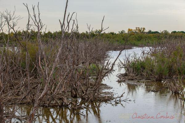 La sansouire. Réserve naturelle régionale de Scamandre, Vauvert