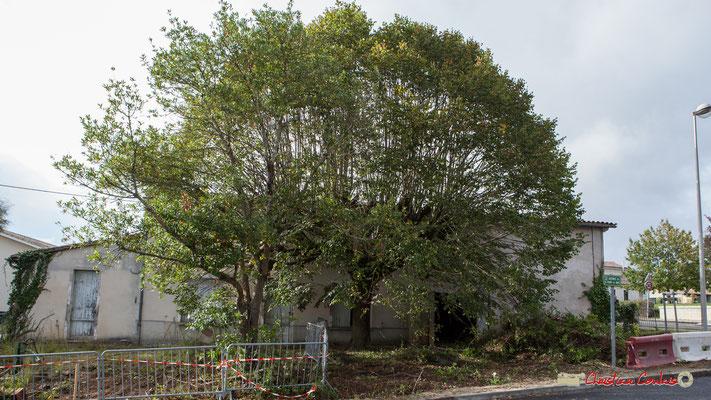 Bâtiments correspondant à une maison d'habitation, ses chais. Ici se situait le Garage Goursolle. Cénac, 11/10/2012