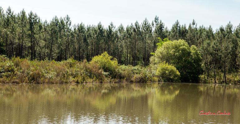 1/3 La grande gravière. Forêt de Migelan, espace naturel sensible, Martillac / Saucats / la Brède. Vendredi 22 mai 2020. Photographie : Christian Coulais