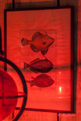 """""""Poissons"""" Le Ras d'eau, atelier de Sébastien Rideau, artiste plasticien. Le Verdon-sur-mer, samedi 3 juillet 2021. Photographie © Christian Coulais"""
