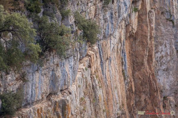 7/9 Vautour fauve en vol d'approche de son nid / Buitre beonado que se acerca al nido, Foz de Arbaiun, Navarra