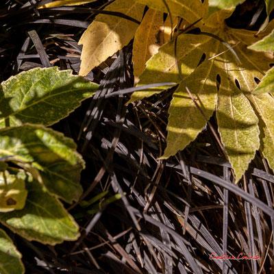 Aux abords de la petite serre. Domaine de Chaumont-sur-Loire, Loir-et-Cher, Région Centre-Val-de-Loire. Lundi 13 juillet 2020. Photographie © Christian Coulais