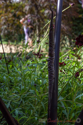 Collection noire; Mathilde Gachet, paysagiste DPLG; Julien Leroy, architecte DE; France. Mercredi 26 août 2015. Photographie © Christian Coulais