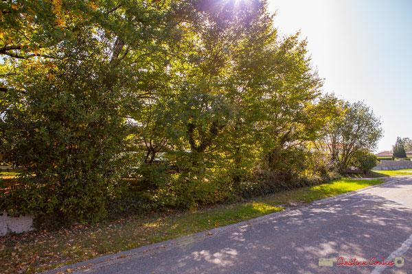 Réussite complète d'une clôture végétalisée par des espèces locales. Avenue du bois du moulin, Cénac, Gironde. 16/10/2017