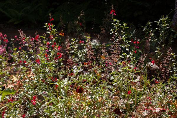 Le jardin Mandala, Domaine de Chaumont-sur-Loire. Lundi 13 juillet 2020. Photographie © Christian Coulais