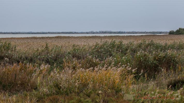L'étang de Scamandre fait partie du site Natura 2000 Camargue gardoise fluvio-lacustre.