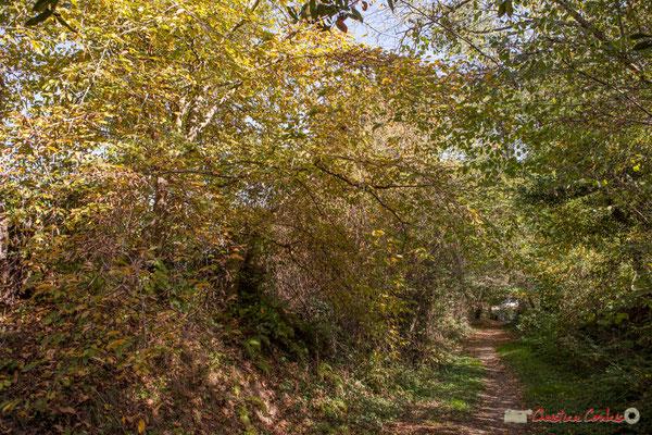 Le chemin de Brice à proximité de l'avenue du bois des filles, vers Cénac, Gironde. 16/10/2017