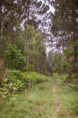 """""""Sentier lumineux"""" Forêt de Migelan, espace naturel sensible, Martillac / Saucats / la Brède. Samedi 23 mai 2020. Photographie : Christian Coulais"""
