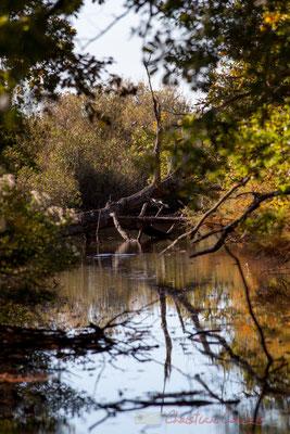 Domaine de Graveyron, Audenge, espace naturel sensible de Gironde