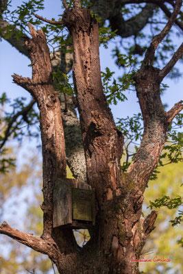 Nichoir. Réserve ornithologique du Teich. Samedi 3 avril 2021. Photographie © Christian Coulais
