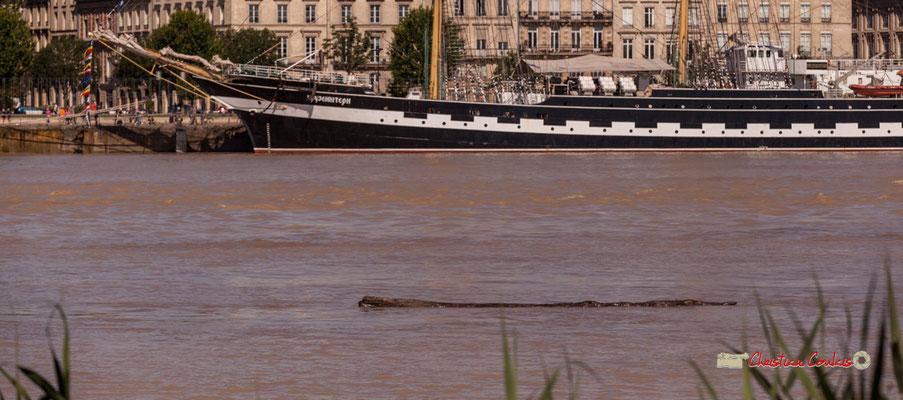 Le tout premier bateau de l'homme et de bien d'autres espèces...le tronc d'arbre. Bordeaux, 22/06/2019 Reproduction interdite - Tous droits réservés © Christian Coulais
