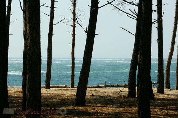 Bois & océan. Petit-Nice de Pyla-sur-Mer, route de Biscarrosse, forêt domaniale de La Teste-de-Buch