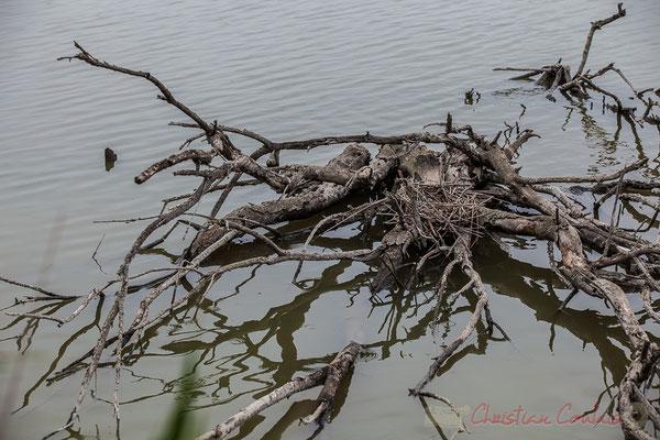 Bois mort sur marais. Réserve naturelle régionale de Scamandre, Vauvert