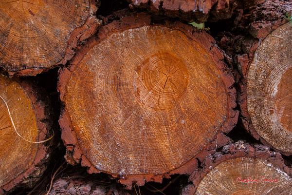 Bille de bois. Forêt de Migelan, espace naturel sensible, Martillac / Saucats / la Brède. Samedi 23 mai 2020. Photographie : Christian Coulais