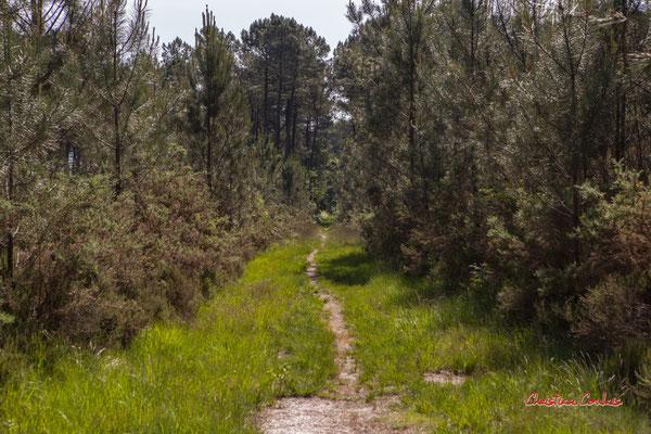 2/3 Pare-feu entre deux parcelles. Forêt de Migelan, espace naturel sensible, Martillac / Saucats / la Brède. Vendredi 22 mai 2020. Photographie : Christian Coulais