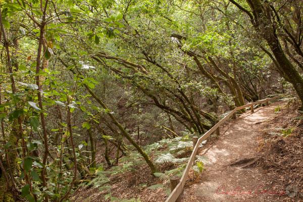 Un sentier facile d'accès qui nous plonge sous une végétation protectrice...Étang de Cousseau
