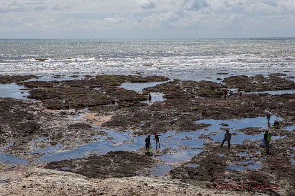 Pêche à pied. Promenade Jean Yole, Corniche vendéenne, Vendée, Pays de la Loire