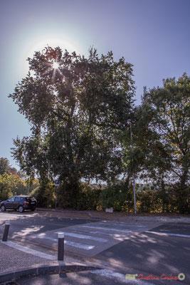 Face aux commerces, vignoble du château Guinault. Très beau paysage, derrière. Avenue de Bordeaux, Cénac, Gironde. 16/10/2017