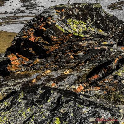 Roche, lichen, détails. Le long du gave du Brousset, Soques, RD 134 bis, Laruns, Pyrénées-Atlantiques