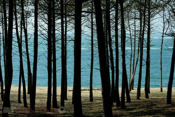 Bois du Petit-Nice de Pyla-sur-Mer, route de Biscarrosse, forêt domaniale de La Teste-de-Buch